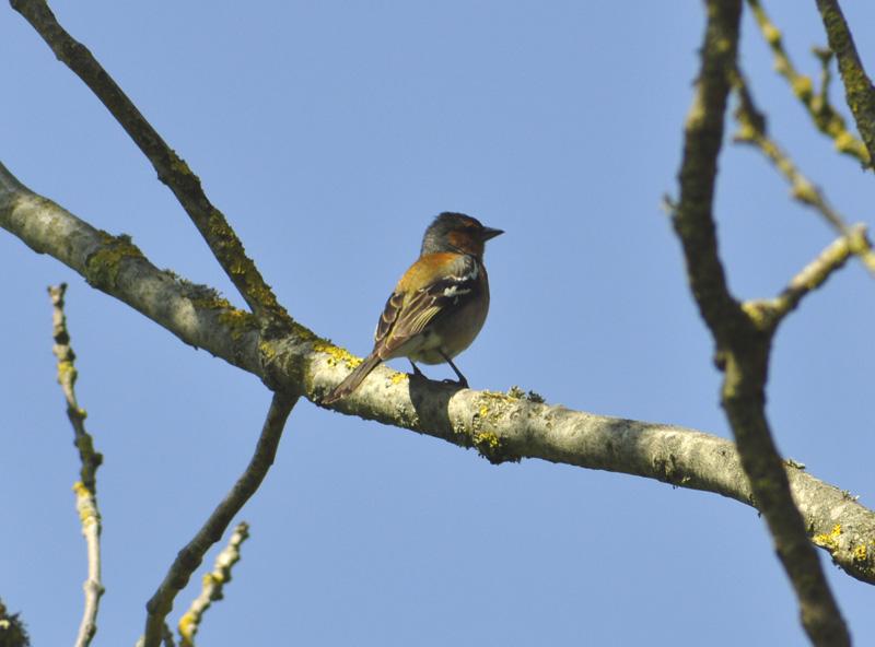 Compte rendu de séjour ornithologique dans le cotentin