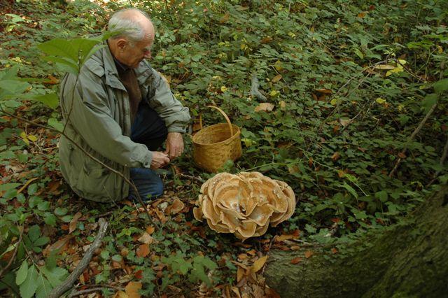 Rencontre mycologique annuelle