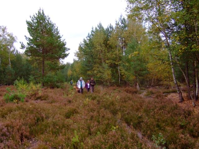 CR de sortie en Forêt de Rambouillet  Site de l